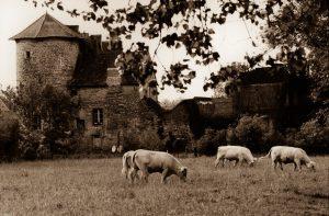 © Raphaël Gaillarde - Ce qu'il reste du château médiéval de Saint-Loup-de-Varennes dont les Niépce administrèrent les terres jusqu'à la Révolution.